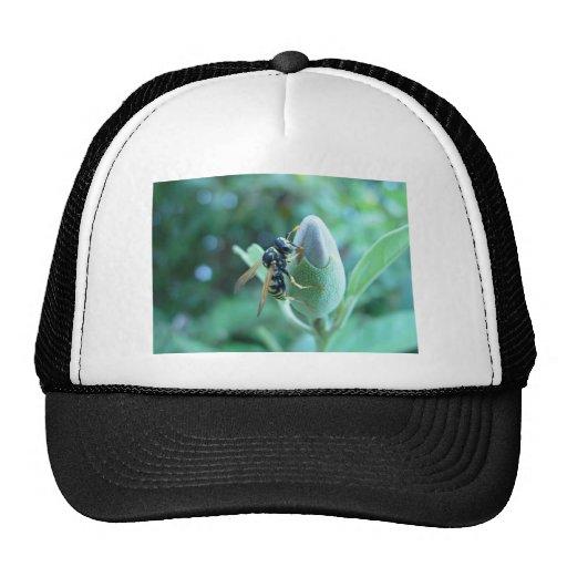 Wasp On Bud, Craigie, Western Australia Hat