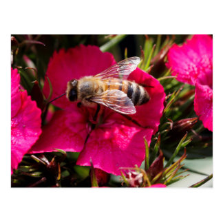 wasp on flower postcard