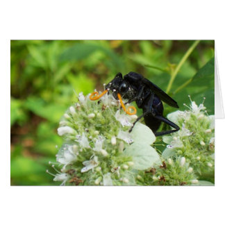 Wasp with a handlebar moustache! greeting card