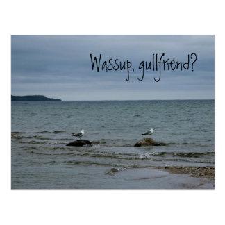 Wassup, gullfriend? postcard