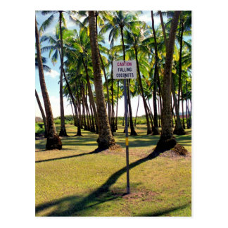 Watch out for Faling Coconuts - Postcard