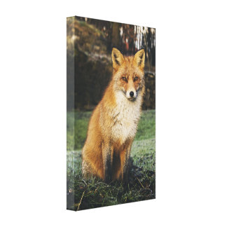 Watchful Fox  13.00'' x 21.00'' Wrapped Canvas