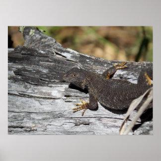 Watchful Lizard Poster