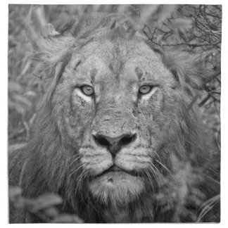 Watching Lion, South Africa Cloth Napkin