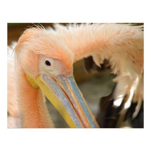 Watching You Pelican Flyer