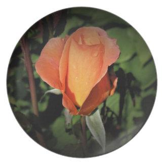 Water Beads on Orange Rose Plate