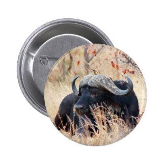 water buffalo pinback buttons