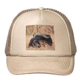 water buffalo cap