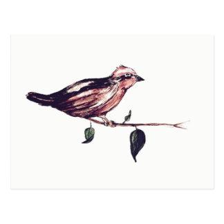 Water color bird postcard
