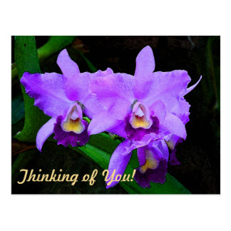 Water Color Effect Cattleya Orchid Flowers Postcard