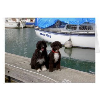 Water Dogs on the Dock Card