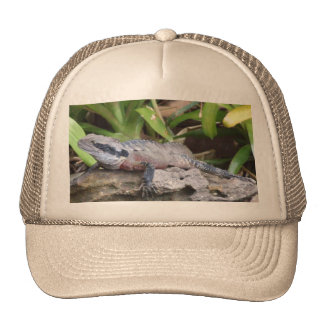 Water Dragon Hat
