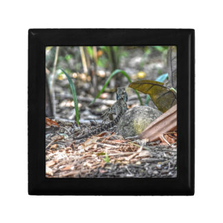 WATER DRAGON QUEENSLAND AUSTRALIA ART EFFECTS SMALL SQUARE GIFT BOX
