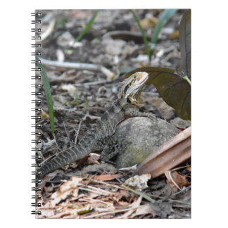 WATER DRAGON RURAL QUEENSLAND AUSTRALIA NOTEBOOKS