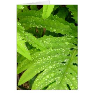 Water Drop Fern Card