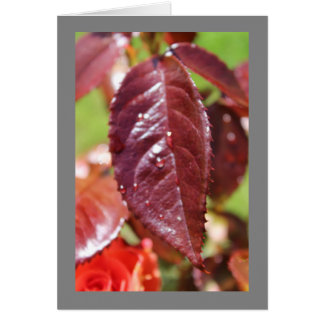 Water Drop on Autumn Leaf Card