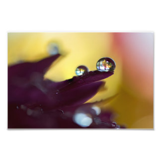 WATER DROP SILHOUETTE by Michelle Diehl Photo Print