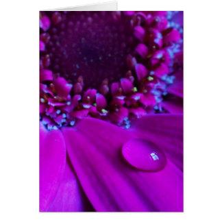 Water Droplet On Petal Card
