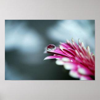 Water Droplet on Pink Flower. Print
