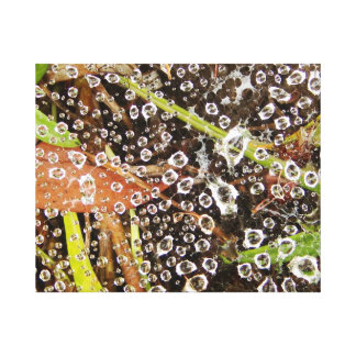 Water droplets on a web canvas print
