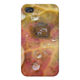 Water Droplets on Autumn Leaf Case For The iPhone 4