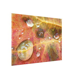 Water Droplets on Autumn Leaf Gallery Wrap Canvas