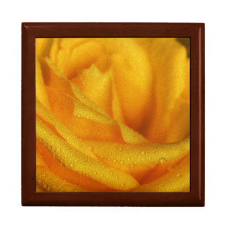 Water Droplets on Elegant Yellow Rose Gift Box