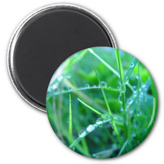 Water Droplets on Grass Magnet