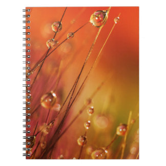 Water Drops on Blades of Grass Colorful Nature Spiral Note Book