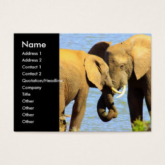 Water Elephants Business Card