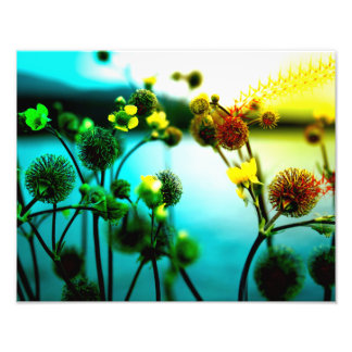 Water Flowers Photo Print