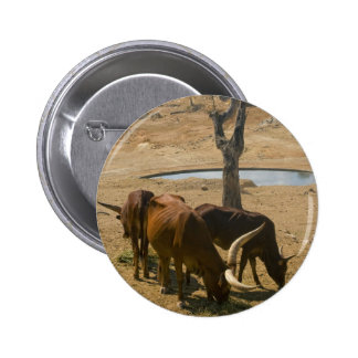 Water Hole Pinback Buttons
