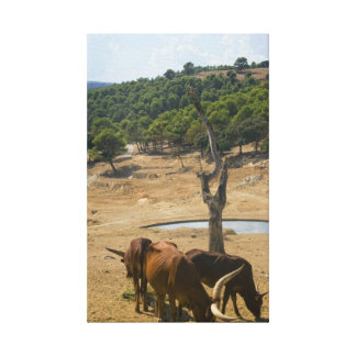 Water hole canvas print