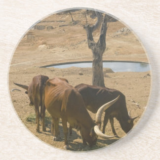 Water Hole Coasters