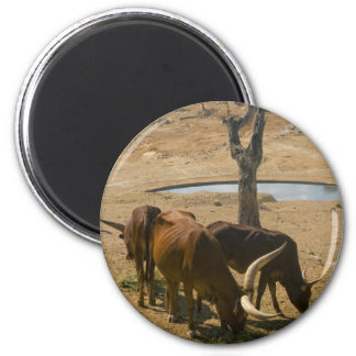 Water Hole Refrigerator Magnets