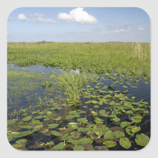 Water lilies and sawgrass in Florida everglades 2 Square Sticker