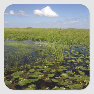 Water lilies and sawgrass in Florida everglades Square Sticker