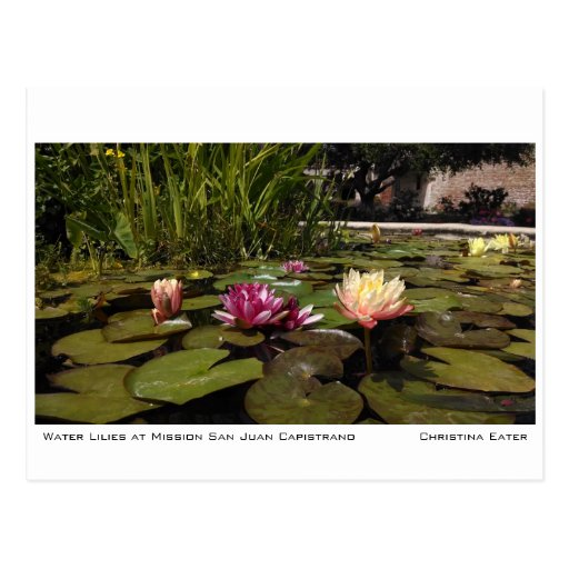 Water Lilies at Mission San Juan Capistrano Post Cards