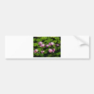 Water lilies bumper sticker