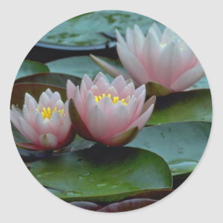 Water Lilies In Pink Stickers