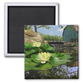 Water Lilies In Pond Magnet