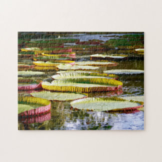 Water Lilies. Jigsaw Puzzle