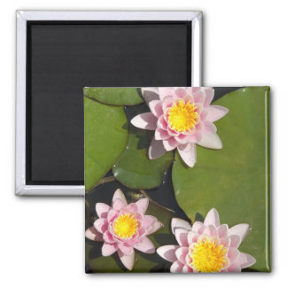 Water lilies square magnet