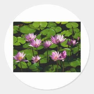 Water lilies round sticker