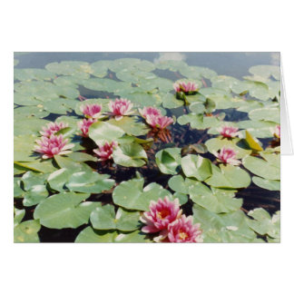 Water Lillies 01 Card