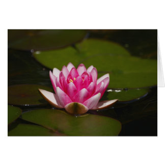 Water lilly and pads card