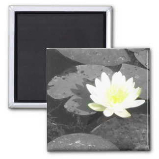 water lilly magnet