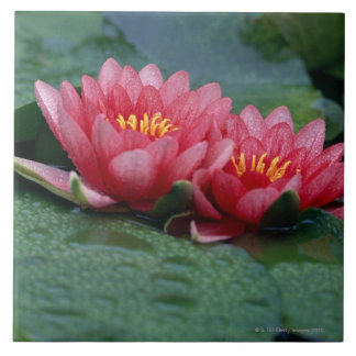 Water Lily 2 Ceramic Tile
