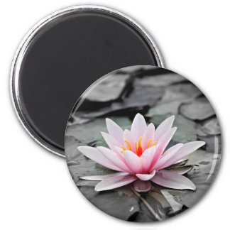 Water Lily #2 Magnet