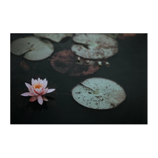 Water Lily Acrylic Wall Art